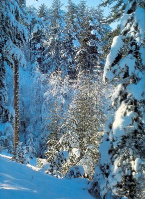 Sila Grande sotto la neve